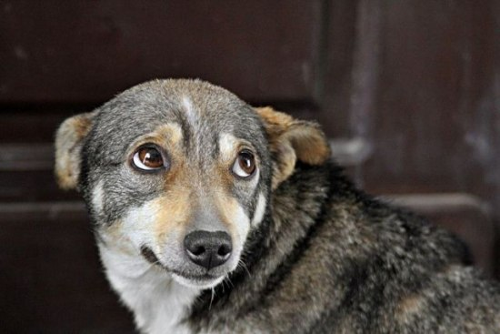 Изменились суммы налогов за владение собаками