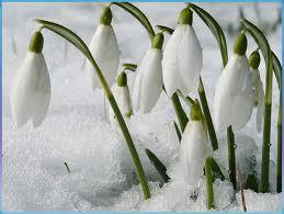 20 марта в Беларусь придет астрономическая весна