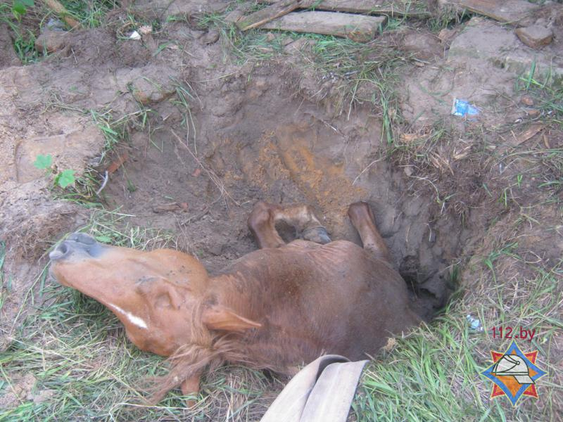 Лошадь упала в выгребную яму