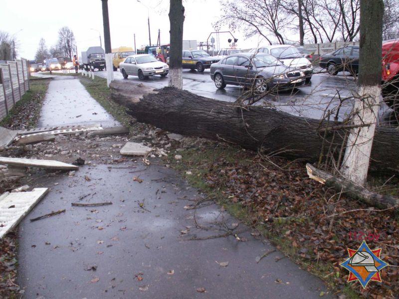 В Витебске ветер свалил дерево на «Газель»