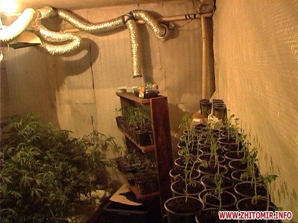 Как вырастить хорошую марихуану в домашних условиях