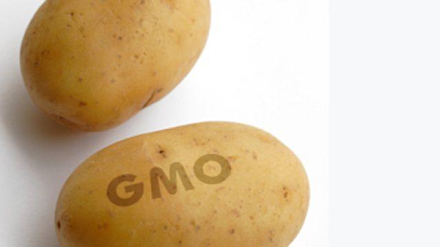 ГМ-картофель