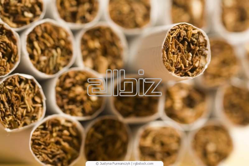 camel icon сигареты:
