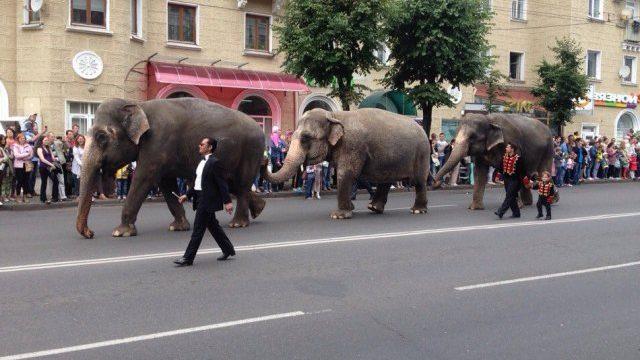 шествие слонов в Могилёве