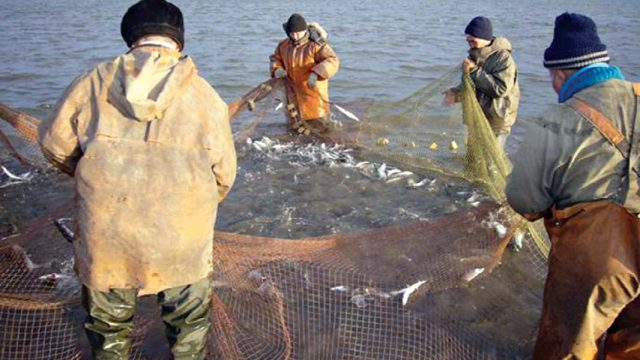Убытки рыболовства