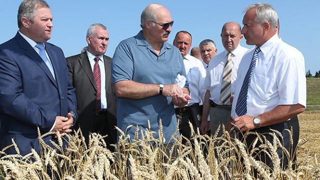 А. Лукашенко в поле