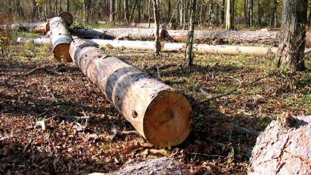Срубленный лес