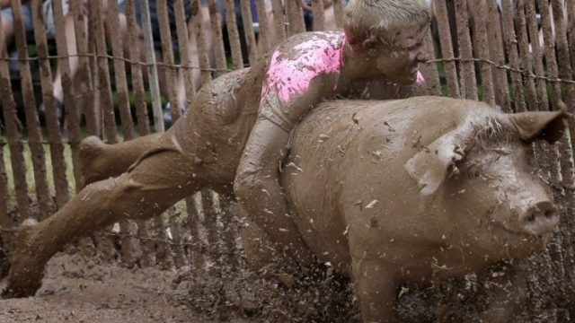 гонка за свиньями