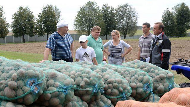 Лукашенко собрал арбузы