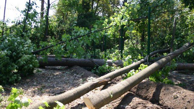 порубка деревьев