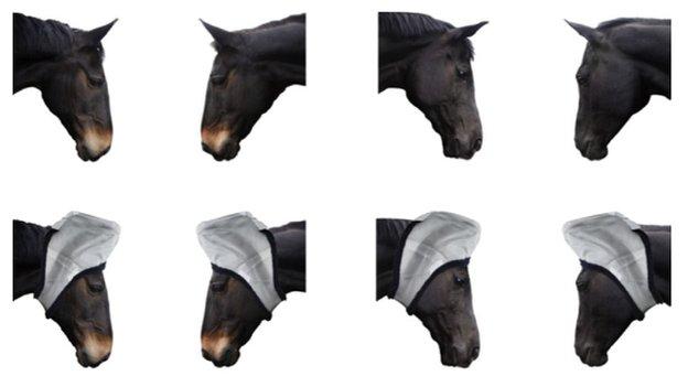 Если уши и глаза лошади на фотографии были видны, животное, учувствовавшее в эксперименте, выбирало ведро, на которое указывали взгляд и уши с картинки.