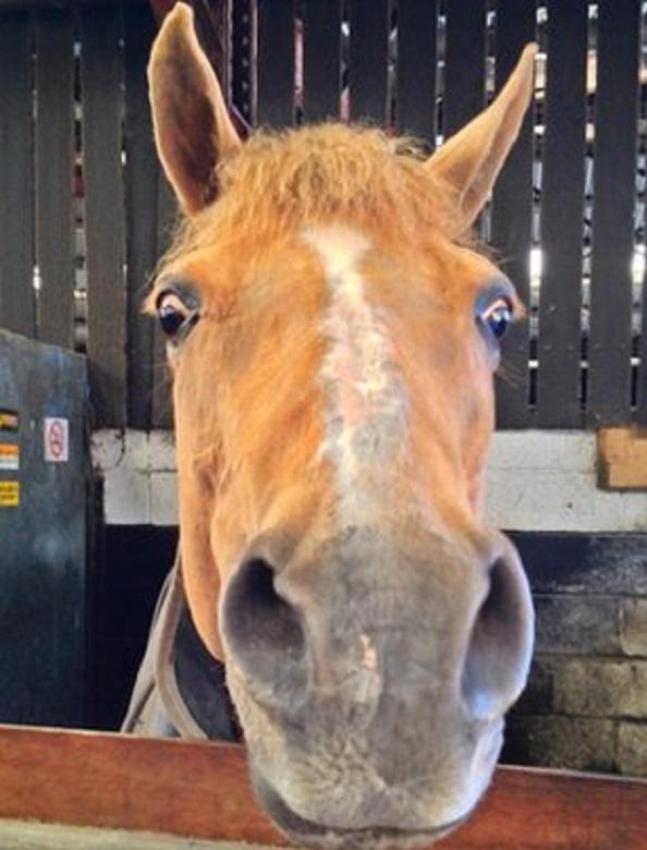 Лошадь способна поворачивать уши на 180 градусов.