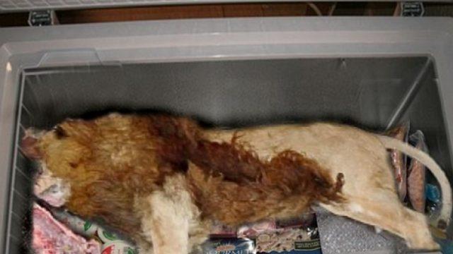 Тело мёртвого льва