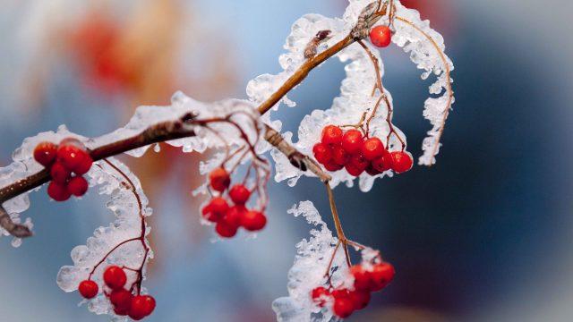 Заморозки в Беларуси