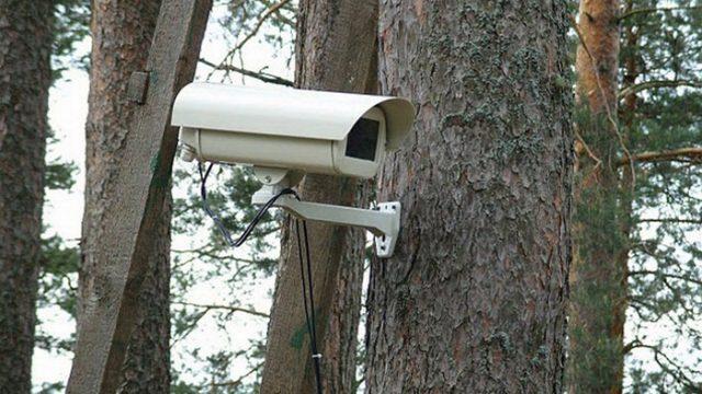 видеокамера в лесу
