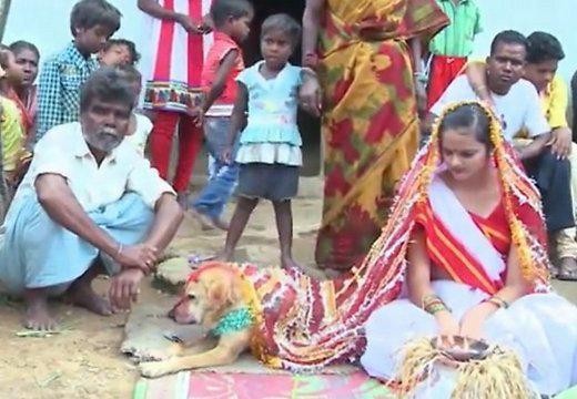 девушка вышла замуж за пса
