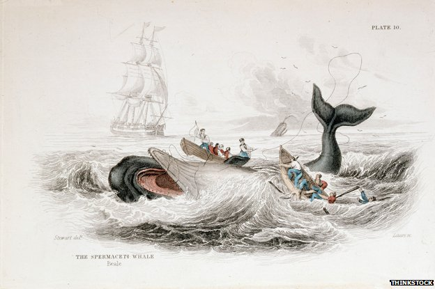 _77620413_old-whale-thinkstock