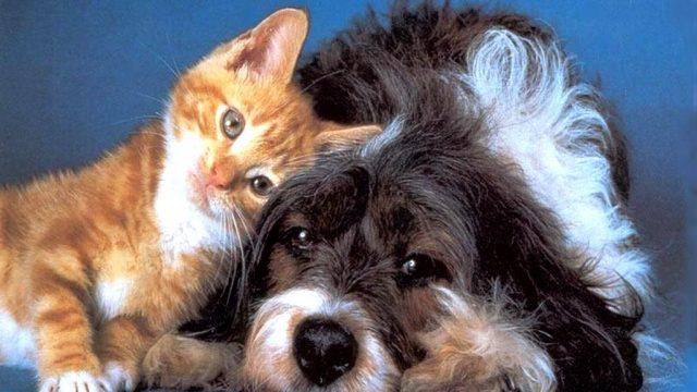 Домашние животные