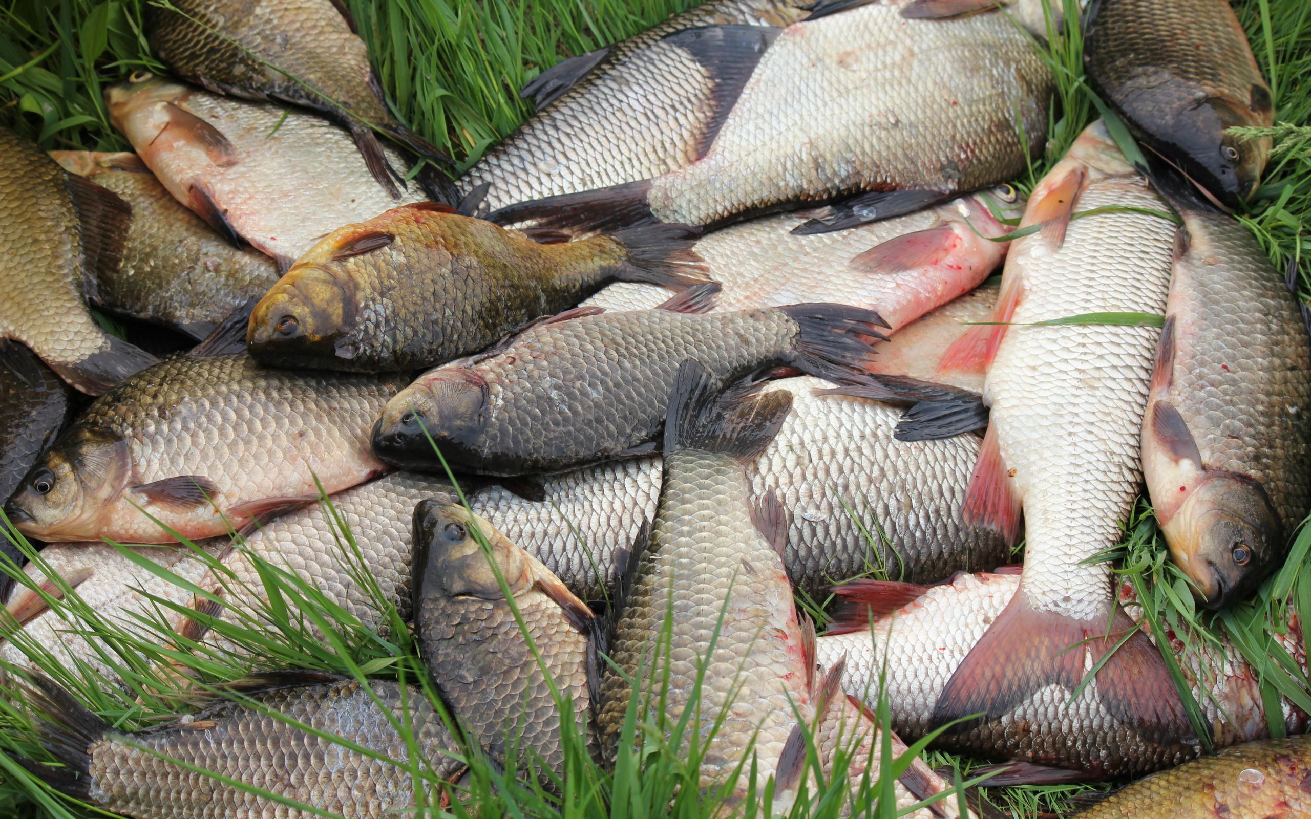 рыбалка рыбка