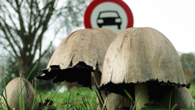 Ядовитые грибы поганки