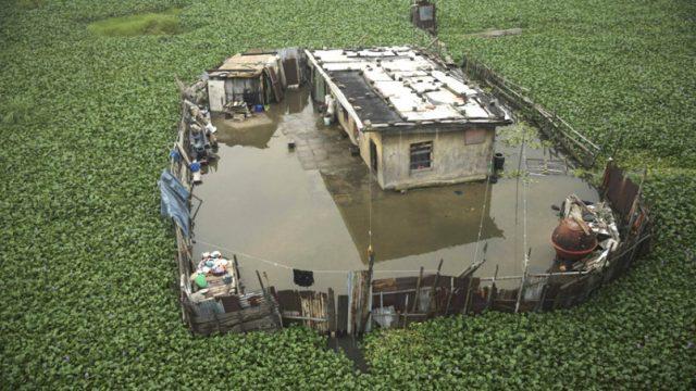 дом окружён водным гиацинтом