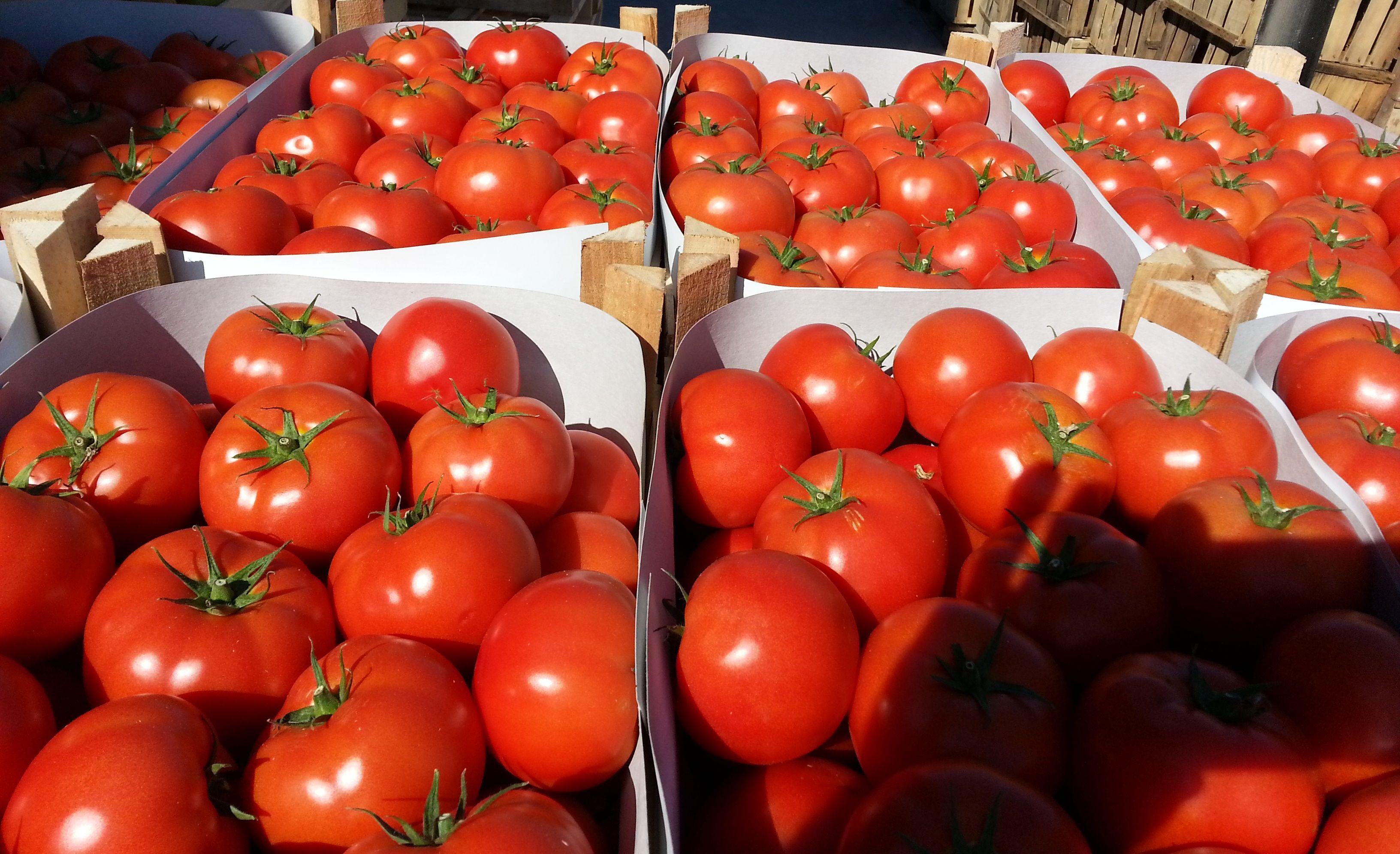 Зараженные томаты