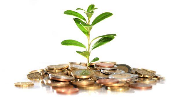 монеты и растение