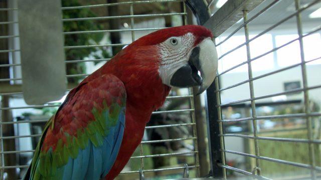 В Москве попугай заразил всю семью смертельной болезнью