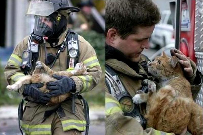 спасенный пожарником кот