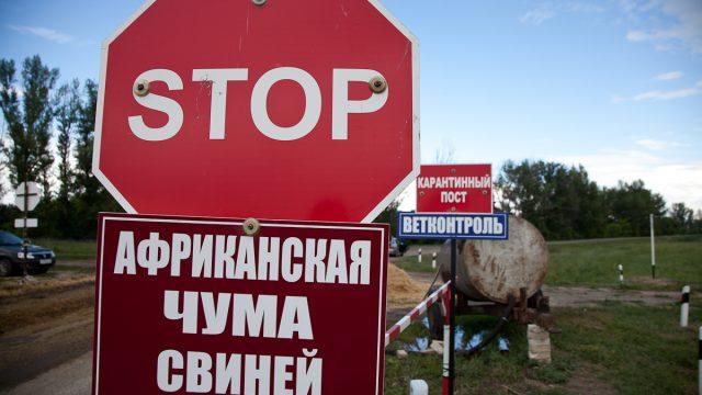 Награнице с республикой Беларусь обнаружили африканскую чуму свиней