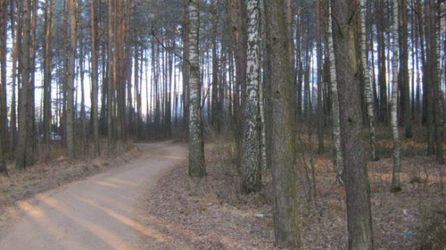 Убийство в лесу