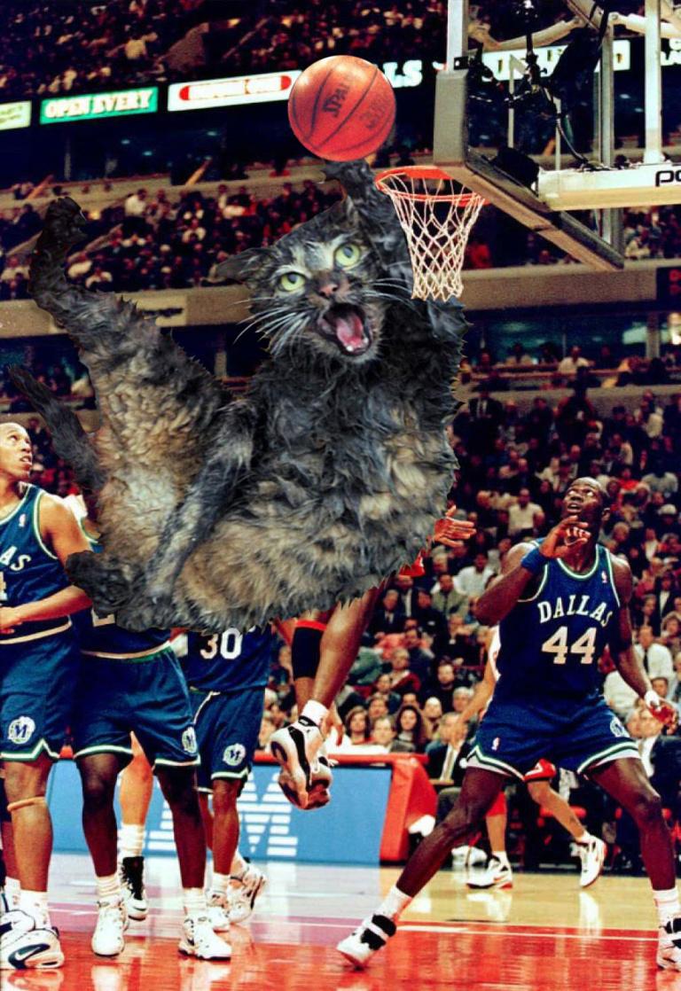 спасенный кот мем