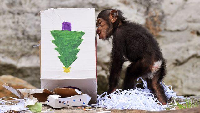 рождество в зоопарках