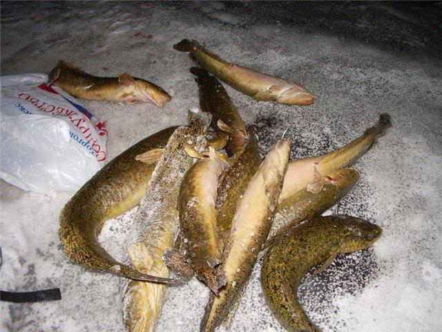 все видео про рыбалку на налима
