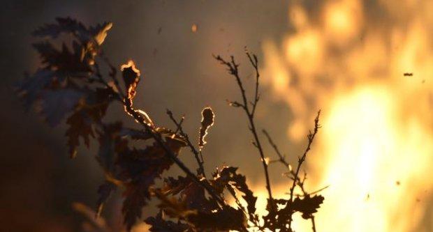 Сгоревная солома