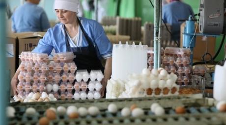 Россельхознадзор вернул Беларуси 30 тысяч яиц