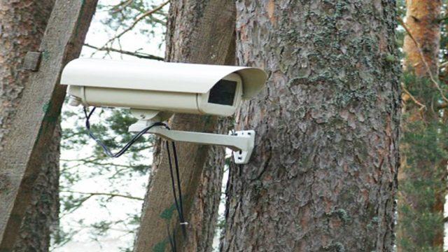 Видеонаблюдение в лесах