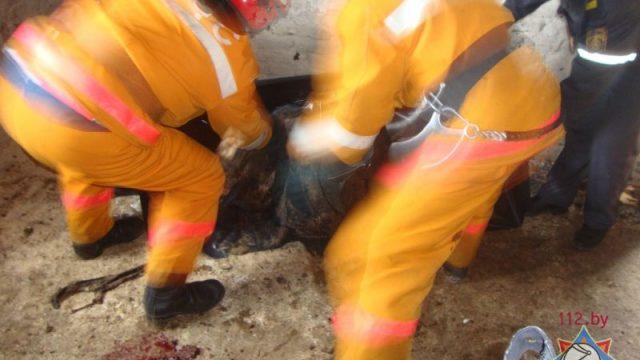 В Лельчицах работника зажало в транспортерной линии по выбросу навоза-мужчина погиб