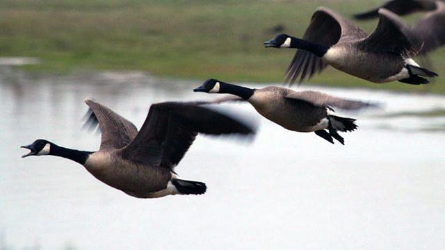 Сезон охоты на птиц