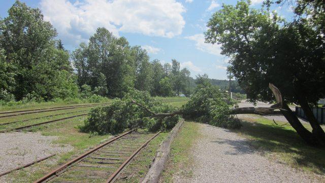 дерево упало на железнодорожные пути