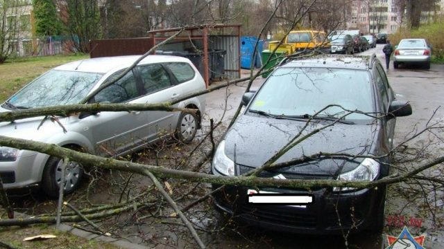 дерево упало на автомобили