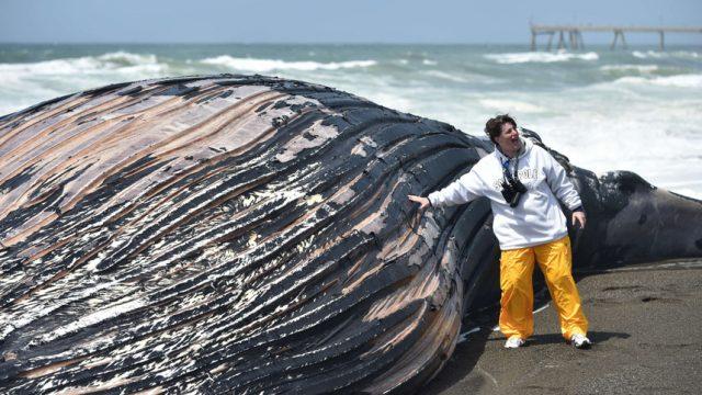 кит выбросился на берег