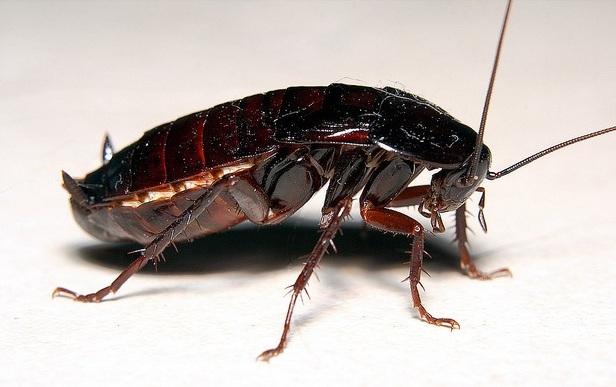 В лидском комбинате школьного питания обнаружили стафилакокк и тараканов