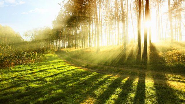 1 июня в Беларуси ожидается потепление до 26 градусов