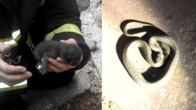 В минском подъезде ползала змея - жильцы вызвали спасателей МЧС