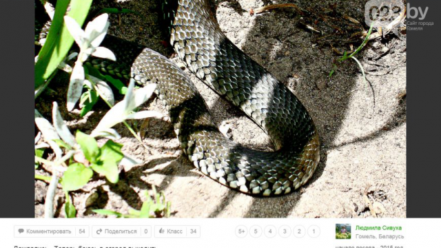 """Гомельчанка нашла в своем саду """"белорусскую анаконду"""""""