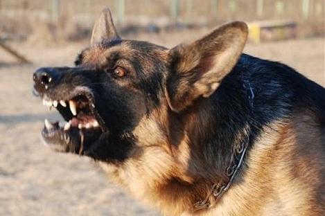 В Брагине бешеная собака укусила ребенка