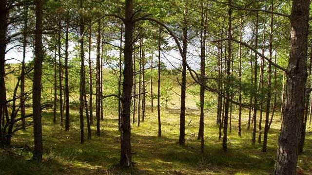 20 июня будет введён запрет на посещение леса на всей территории Беларуси