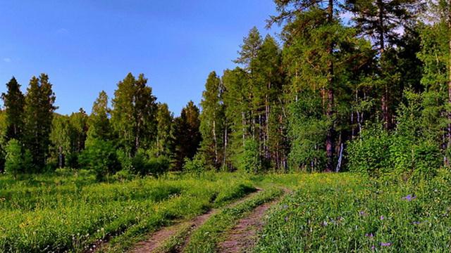 В Березинском районе милиционеры 10 часов искали заблудившегося в лесу 4-летнего мальчика