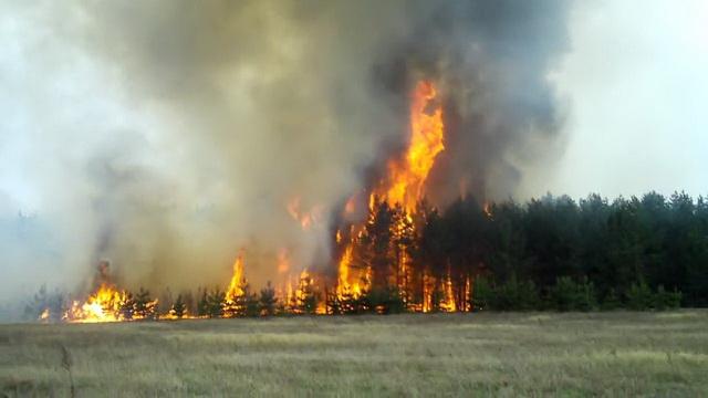 Калинин - Собственники сельхоз и лесных угодий должны возмещать затраты на тушение пожаров